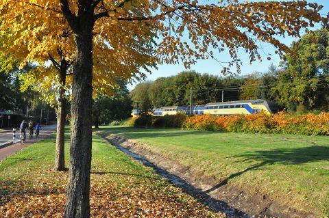 NS trein over spoor in groene omgeving (foto: NS)