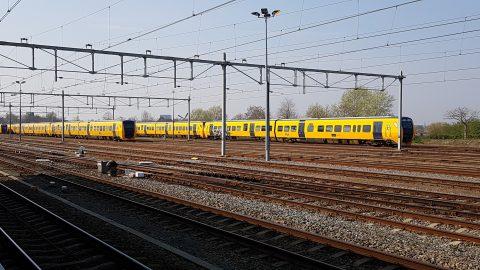 Buffels bij Nijmegen